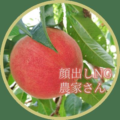 塚原農園の白桃「あかつき」の生産農家、髙木農園さん
