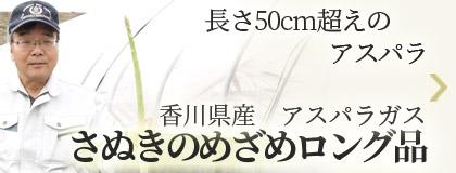 長さ50cm超えのアスパラ 香川県産アスパラガス さぬきのめざめロング品