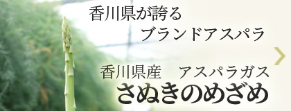 香川県が誇るブランドアスパラ 香川県産アスパラガス さぬきのめざめ