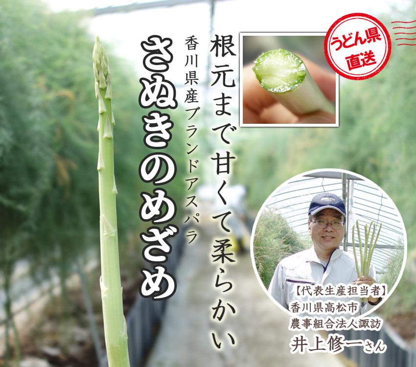 めいっぱいの太陽と潮風が育てた、甘酸っぱいみかん 香川県産温州みかん さっちゃんのみかん
