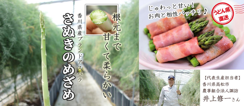 根元まで甘くて柔らかい!香川県産ブランドアスパラ「さぬきのめざめ」