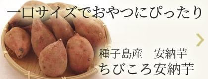 一口サイズでおやつにぴったり!種子島産安納芋 ちびころ安納芋