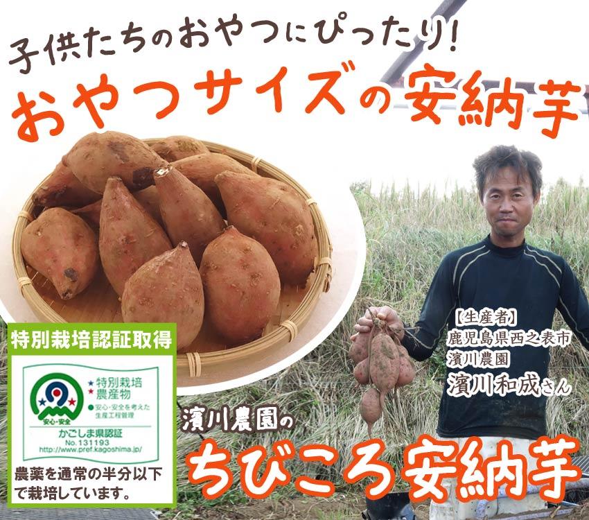 減農薬!安心して毎日食べられる、甘くて優しい濱川農園のちびころ安納芋