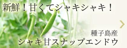 新鮮!甘くてシャキシャキ!種子島産 シャキ甘スナップエンドウ