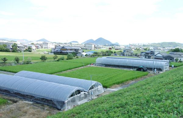 アスパラ栽培用ハウスの風景