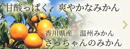 甘酸っぱく、爽やかなみかん 香川県産温州みかん さっちゃんのみかん