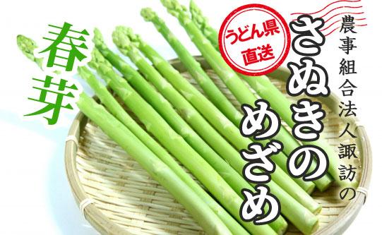 うどん県香川のブランドアスパラ「さぬきのめざめ」