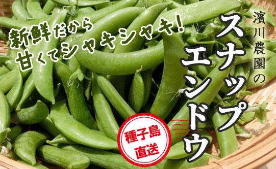 種子島直送 濱川農園のスナップエンドウ
