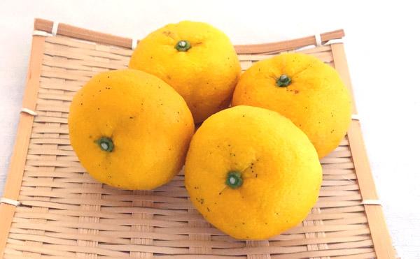 減農薬、有機肥料だけで育てた種なし柚子「多田錦」