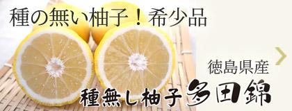 種の無い柚子!希少品 徳島県産 種無し柚子「多田錦」