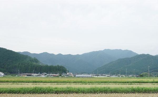 丹波氷上のきれいな田んぼの風景