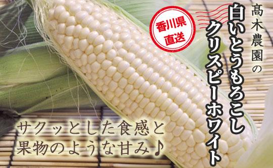 香川県産<br>白いとうもろこし「クリスピーホワイト」