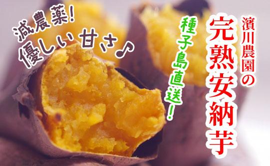 【鹿児島県種子島産】  濱川農園の完熟安納芋