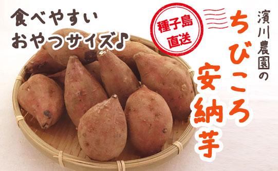 【一口サイズの小さい安納芋】  濱川農園のちびころ安納芋