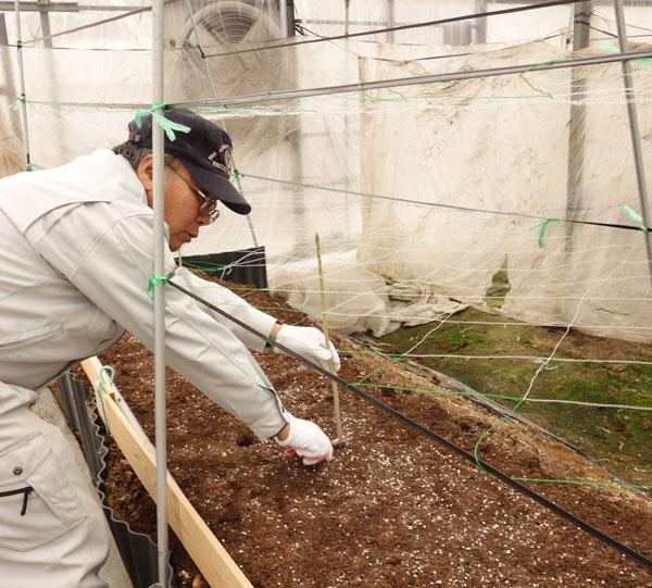 「さぬきのめざめ」の収穫作業を行う農事組合法人諏訪さん