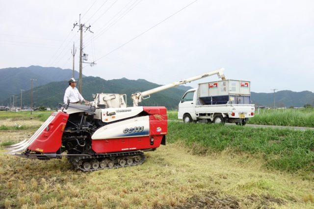 コンバインでのお米の収穫風景