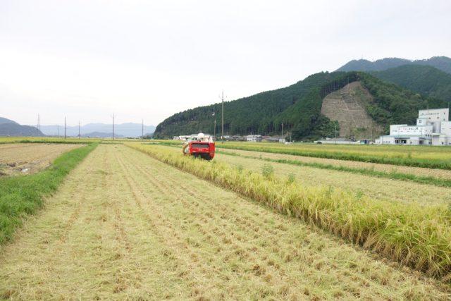 丹波ひかみ米の収穫風景