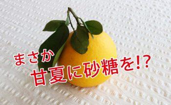みかんの甘夏(あまなつ)に砂糖をかけて食べると本当に美味しいのか!?
