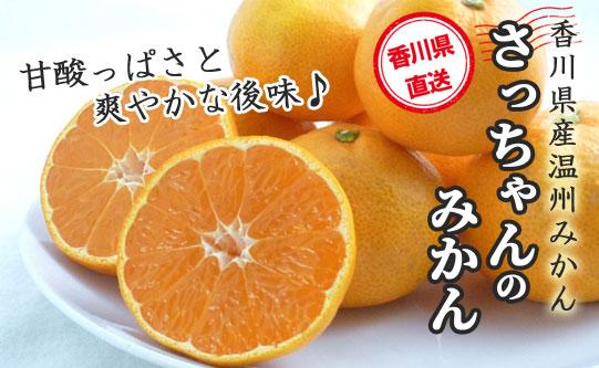【甘酸っぱく、爽やかな後味のみかん】  香川県産 さっちゃんのみかん