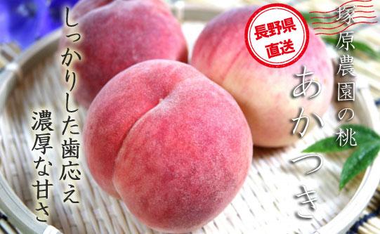 【硬くて甘い桃が好きなあなたに】  塚原農園の白桃「あかつき」厳選大玉