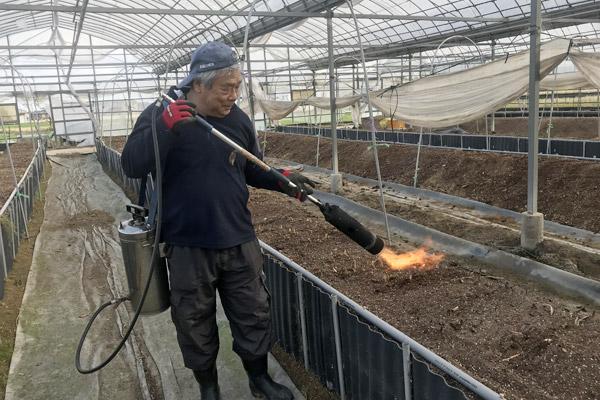 アスパラガス畑の土壌焼却作業風景